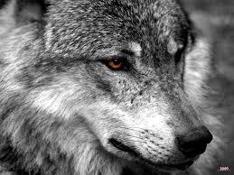 El presidente de la Junta de Castilla y León defenderá ante la UE las minas a cielo abierto y la caza del lobo