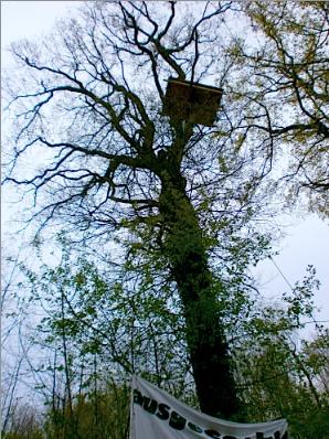 Bosque Ocupado Contra Cielo Abierto de Carbón: Alemania- Declaración